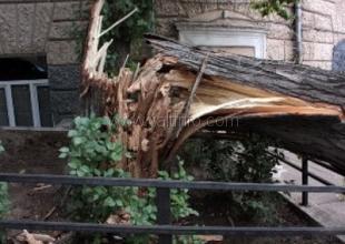Упавшее дерево чуть не оставило без газа ялтинцев