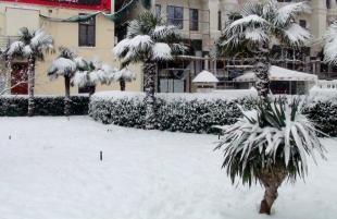 Морозы на ЮБК убили фруктовые деревья и покалечили пальмы