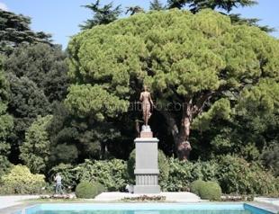 В Никитском саду упала Флора
