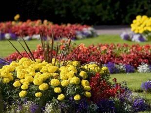 Ялту засадят цветами на 230 тысяч