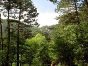 В Крыму опровергли слухи относительно введения налога на лесные прогулки