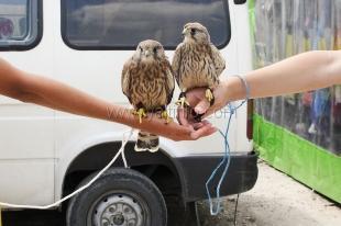 Мэр Ялты поручил ветслужбе заняться животными на набережной