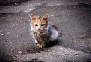 В Ялте будет создан приют для бездомных животных