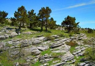 Директор ялтинского заповедника  отчиталась о заработках на туристах