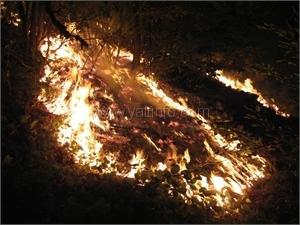 Сгорела  «Лесная Сказка»  на ялтинской трассе