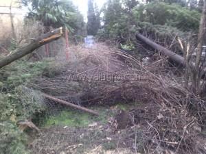 Прокуратура обещает разобраться в вопросе вырубки кипарисов в Ялте