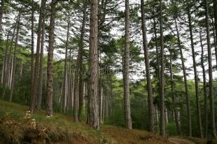 Весной в Ялте закрывают для посещения леса