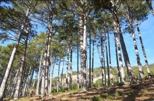 В ялтинских лесах начались противопожарные рейды
