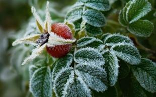 В Крыму — первые заморозки