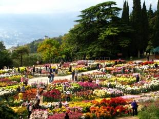 Никитский сад подготовил проект по озеленению Крыма