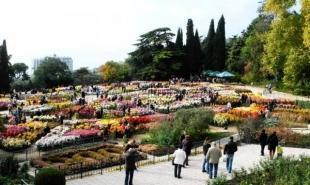 В Никитском ботаническом саду открылся 61-й бал хризантем