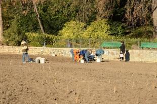 В Никитском саду высадят почти 80 тысяч тюльпанов