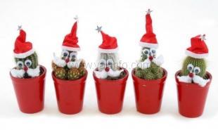 В Никитском ботсаду к Новому году нарядят кактусы и устроят представления для детей