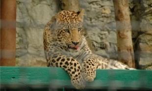 Животных из Крыма пока не могут перевезти в другие зоопарки России