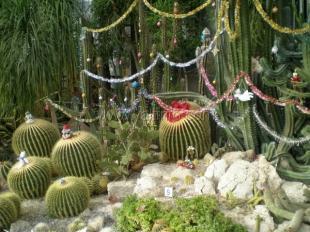 Никитский сад перенес похолодание без потерь