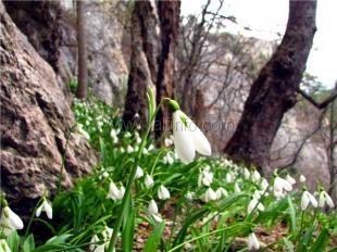 Никитский ботанический сад сделал подарок влюблённым на 14 февраля