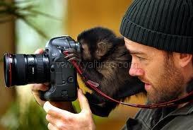 В Ялте будут усиленно бороться с фотографами-«живодерами»