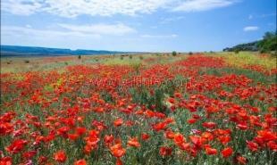 На майские праздники в Крыму будут ждать 125 тыс. туристов