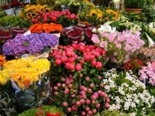 В Ялте перенесут цветочный рынок