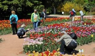 Никитский ботанический сад в Крыму стал самым популярным объектом у туристов в майские праздники