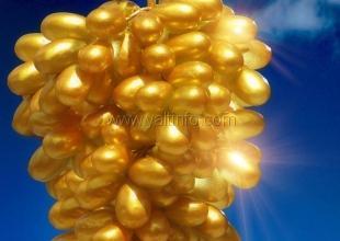 В Крыму пройдёт Республиканский фестиваль «Золотая Гроздь Винограда»