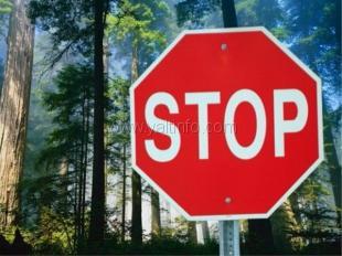Запрет на посещение Крымских лесов продлён до 5 сентября 2015 года