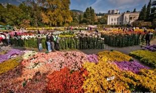 Ежегодный бал хризантем Никитского ботанического сада продемонстрирует 30 тысяч цветов 200 сортов
