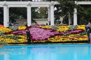 В Никитском Ботаническом Саду в 62-й раз открылся «Бал хризантем»