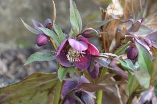 В Никитском ботсаду начался сезон зимнего цветения