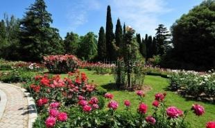 Никитский ботанический сад готовится к весне