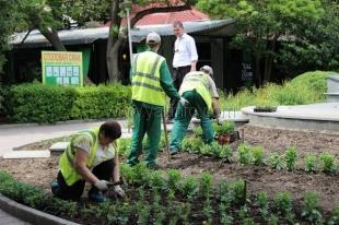 До 20 мая в Ялте высадят более 20 тысяч единиц цветов