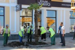 Пальмовая аллея на ялтинской набережной пополнилась новыми деревьями