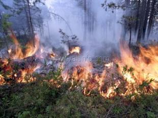 От удара молнии выгорело два гектара заповедника