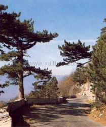 Дорога на Ай-Петри временно перекрыта