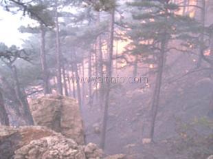 Ялтинцы считают, что пожар в заповеднике произошел не случайно