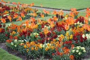 С начала года в Ялте высадили более 42 тыс. цветов