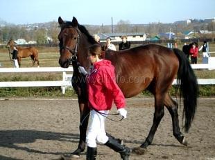 Под Ялтой пройдет конный забег