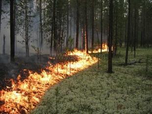 Под Ялтой снова произошел лесной пожар
