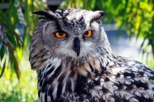 В Ялте МЧСники спасли редкую птицу