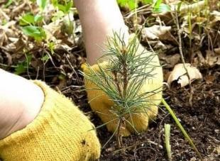 В Ялте пройдет акция по высадке леса