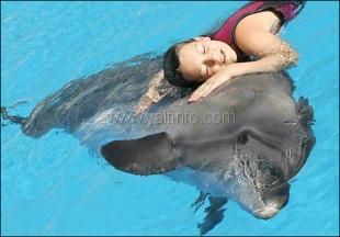 В Ялте откроют Центр дельфинотерапии